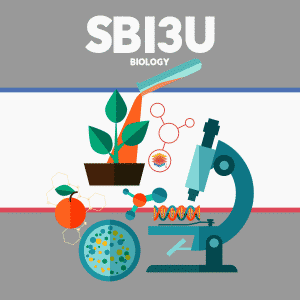 SBI3U